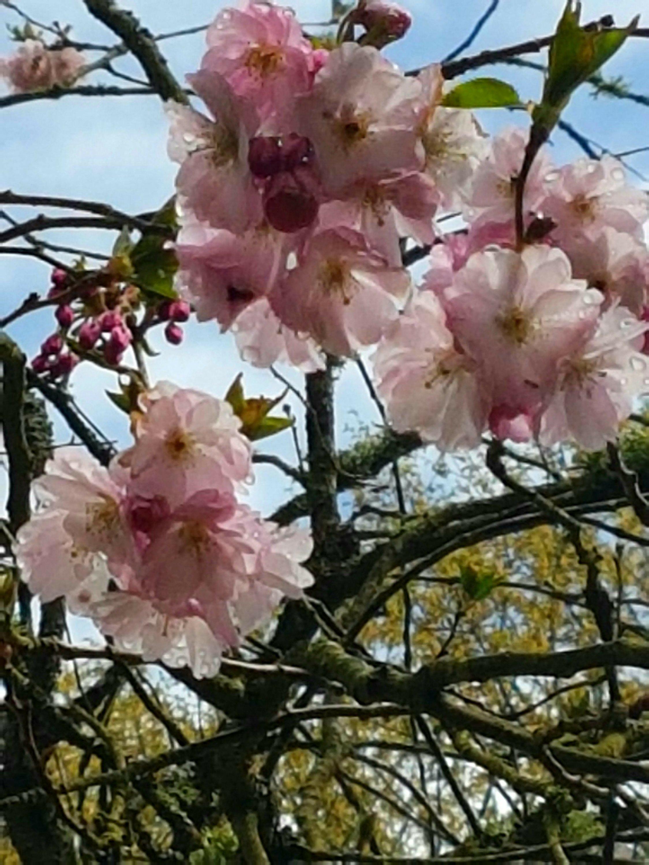 Jardin tordu ties//plant tie fil-frost résistant réutilisable 5M ou 8M longueurs